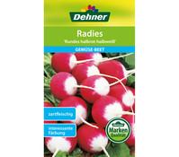 Dehner Samen Radies 'Rundes halbrot-halbweiß'