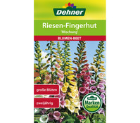 Dehner Samen Riesen-Fingerhut 'Mischung'