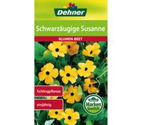 Dehner Samen Schwarzäugige 'Susanne'
