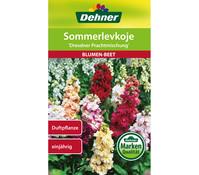 Dehner Samen Sommerlevkoje 'Dresdner Prachtmischung'