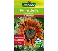 Dehner Samen Sonnenblume 'Abendsonne'