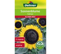 Dehner Samen Sonnenblume 'Full Sun'