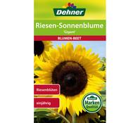 Dehner Samen Sonnenblume 'Gigant'