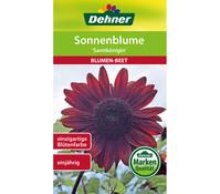 Dehner Samen Sonnenblume 'Samtkönigin'