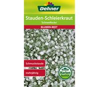 Dehner Samen Stauden-Schleierkraut 'Schneeflocke'