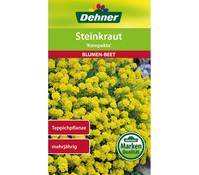 Dehner Samen Steinkraut 'Kompakta'