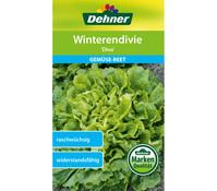Dehner Samen Winterendivie 'Diva'