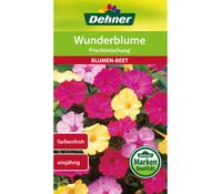 Dehner Samen Wunderblume 'Prachtmischung'