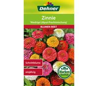 Dehner Samen Zinnie 'Niedrige Liliput Prachtmischung'