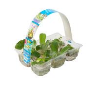 Dehner Schwimmpflanzen-Mix, 6er Pack