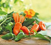 Dehner Snackpaprika, orange