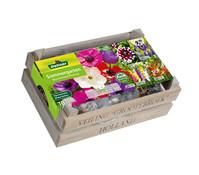 Dehner Sommergarten Blumenzwiebel-Mischung