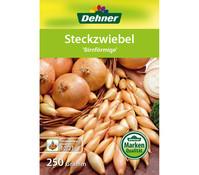 Dehner Steckzwiebel 'Birnförmige'