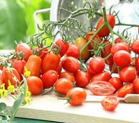 Dehner Tomate 'Caprese'