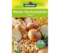 Dehner Winter-Steckzwiebel 'Presto'