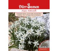 Dürr Samen Alpen-Edelweiß
