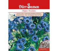 Dürr Samen Alpen-Enzian