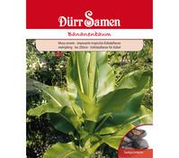 Dürr Samen Bananenbaum