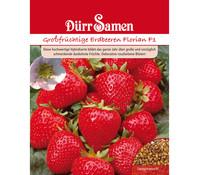 Dürr Samen Großfrüchtige Erdbeeren 'Florian F1'