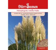 Dürr Samen Pampasgras 'Weiße Feder'