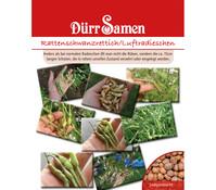 Dürr Samen Rattenschwanzrettich/Luftradieschen