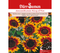 Dürr Samen Sonnenblume 'Ring of Fire'