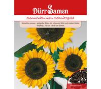 Dürr Samen Sonnenblume 'Schnittgold'