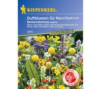Duftblumen für Naschkatzen Mix, Saatgut von Kiepenkerl