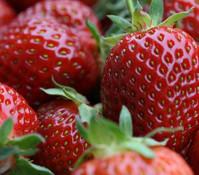 Erdbeer-Ampel 'HUMMI'