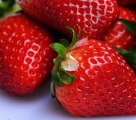 Erdbeere 'Erdbeersommer', 8er Schale