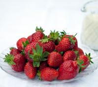 Erdbeere 'Königin Luise', 8er Schale