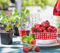Erdbeere 'Mieze Schindler', 8er Schale