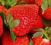 Erdbeere 'Ostara'