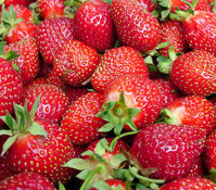 Erdbeere 'Viva Rosa'