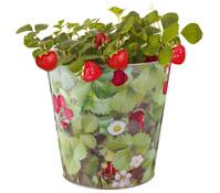 Esschert Zink-Eimer Erdbeere, Ø 28 cm