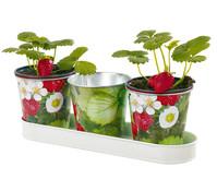 Esschert Zinktopf, 3er Set mit Erdbeermotiv, Ø 11 cm