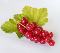 Gourmet Garten Johannisbeere 'Ribest® Susette®'