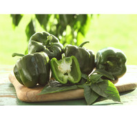 Gourmet Garten Paprika 'Sweet Green'