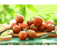 Gourmet Garten Schokoladen Tomate 'Kakao'