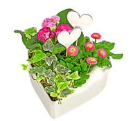 Herz 'Betti' bepflanzt