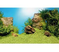 Juwel Poster 1 Aquarium Rückwand