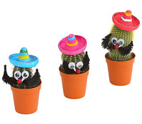 Kaktee, mit Sombrero