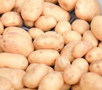 Kartoffel 'Sarpo Kifli'