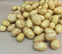 Kartoffel 'Sarpo Shona'