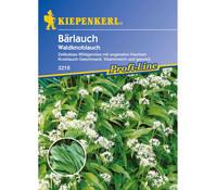 Kiepenkerl Saatgut Bärlauch 'Waldknoblauch'