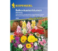 Kiepenkerl Saatgut Balkonkastenblumen Mix