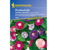 Kiepenkerl Saatgut Prunkwinde Tricolore Mix