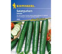 Kiepenkerl Saatgut Salatgurke 'Saladin'
