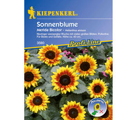 Kiepenkerl Saatgut Sonnenblume Merida Bicolor
