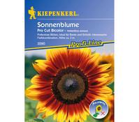 Kiepenkerl Saatgut Sonnenblume Pro Cut Bicolor